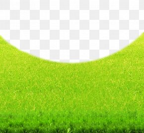 Green Lawn Natural Environment Background - Lawn Green Grasses Grassland Wallpaper PNG