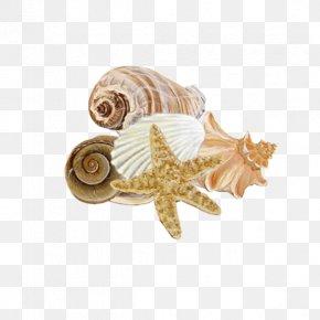 Seashell - Seashell Mollusc Shell Conchology Seabed PNG