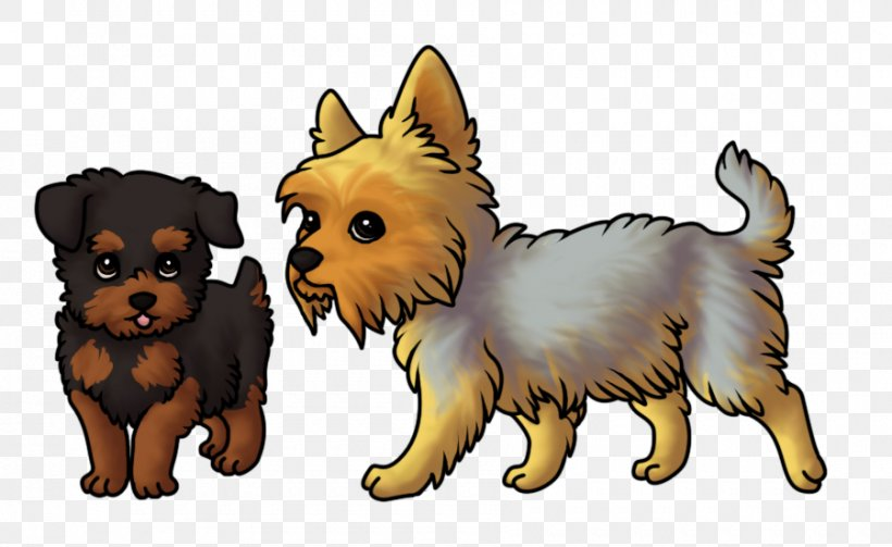 Yorkshire Terrier Australian Terrier Cairn Terrier Norwich Terrier Australian Silky Terrier, PNG, 900x553px, Yorkshire Terrier, Australian Silky Terrier, Australian Terrier, Breed, Cairn Terrier Download Free