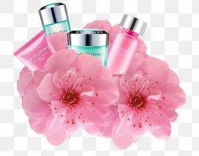 Sakura Cosmetics - Cherry Blossom Cosmetics Icon PNG