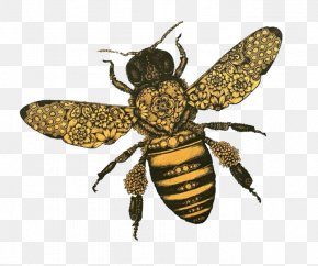 Honey Bee - Western Honey Bee T-shirt Insect Hopeless Fountain Kingdom World Tour PNG