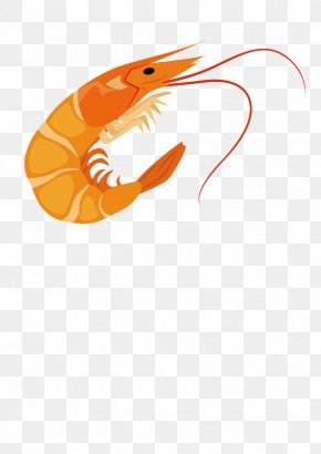 Shrimp - Cartoon Shrimp PNG