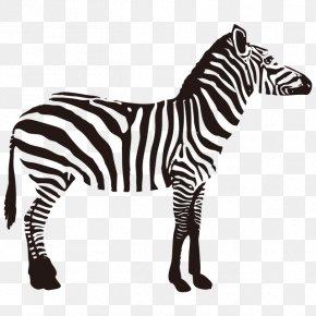 Zebra - Quagga Zebra Fauna Of Africa Animal PNG