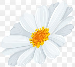 White Daisy Transparent Clip Art Image - Common Daisy Oxeye Daisy Clip Art PNG