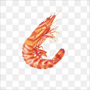 Shrimp - Seafood Caridea Shrimp Crab PNG