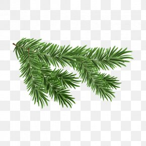 Tree Top View - White Spruce Branch Royalty-free Clip Art PNG