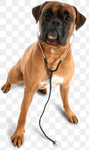 Dog - Dog Veterinarian Pet Clinique Vétérinaire Boulevard Veterinary Hospital PNG