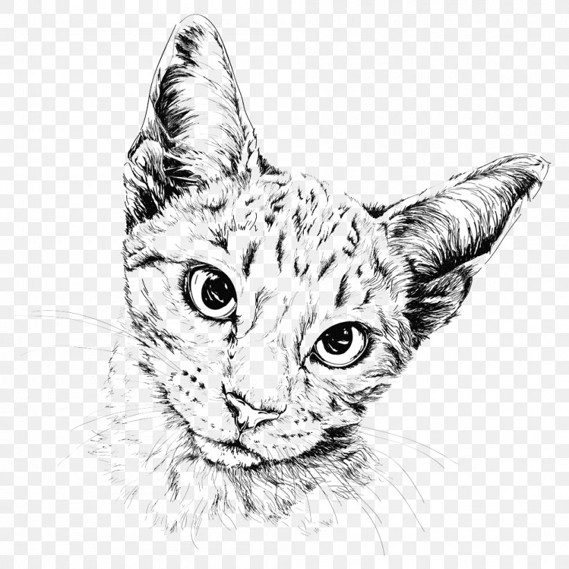 Cat Drawing Painting Illustration Png 1000x1000px Cat Art Bicolor Cat Big Cats Black And White Download