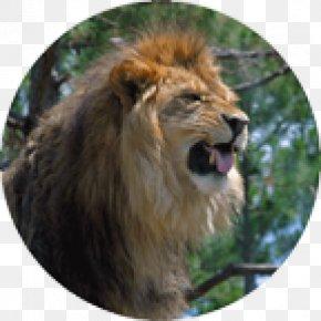 Roar - East African Lion Roar Photography PNG