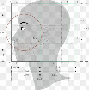 Golden Ratio Face Male - Golden Ratio Human Body Proportionality Geometry PNG