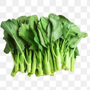 Kale Stems And Leaves - Chinese Broccoli Brassica Juncea Vegetable Kale PNG