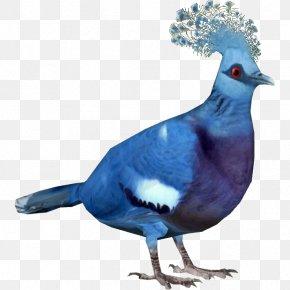 Pigeon - Zoo Tycoon 2: Endangered Species Zoo Tycoon 2: Extinct Animals Victoria Crowned Pigeon Western Crowned Pigeon Bird PNG