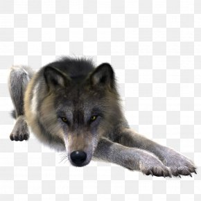 Wolf - Greenland Dog Coyote Alaskan Tundra Wolf Canidae Stock PNG