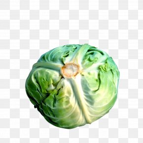Cabbage - Savoy Cabbage Cauliflower Broccoli Brussels Sprout PNG