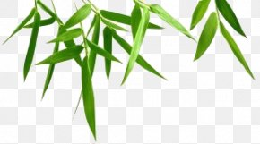 Bamboo Leaf Transparent Background - Bamboo Photography PNG