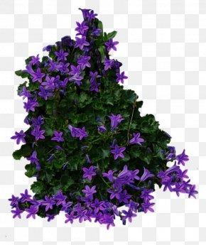 Bush Image - Shrub Flower PNG