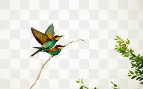 Graffiti - Hummingbird European Bee-eater Wallpaper PNG