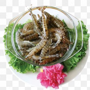 Mantis Shrimp Bowl - Hot Pot Seafood Chinese Cuisine Shrimp Hong Kong Cuisine PNG
