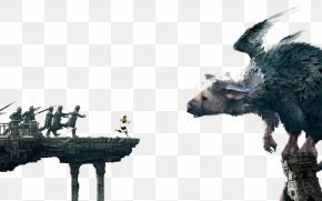 The Last Guardian The Ico & Shadow Of The Colossus Collection Video Game PNG