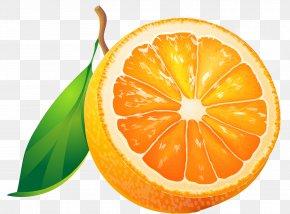 Grapefruit - Fruit Orange Tangerine Clip Art PNG