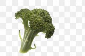 Broccoli - Broccoli Vegetable Fruit Plant PNG