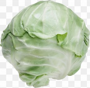Brussels Sprout Plant - Cabbage Iceburg Lettuce Cruciferous Vegetables Vegetable Wild Cabbage PNG