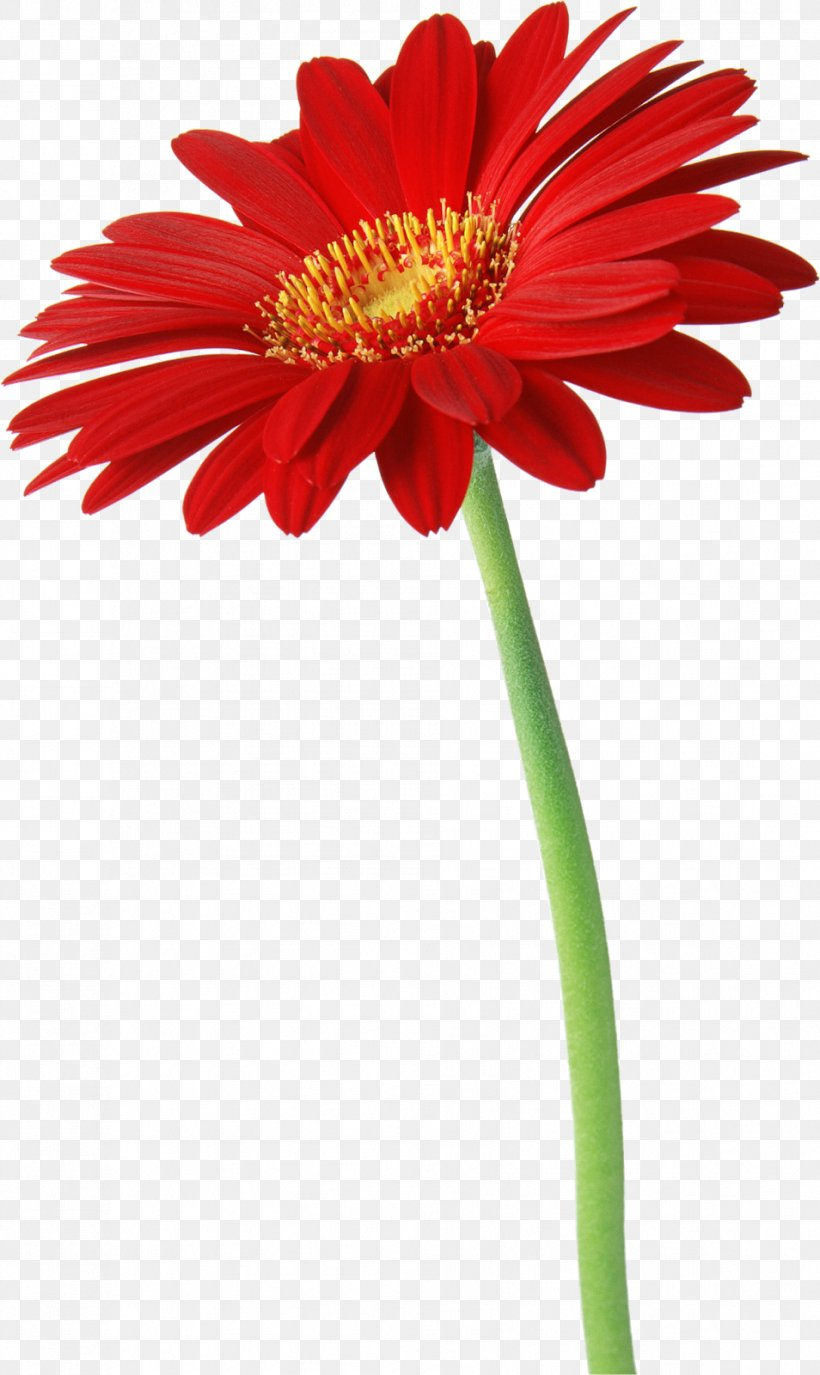 Desktop Wallpaper Iphone Flower Samsung Galaxy Y Png 954x1600px Iphone Animation Annual Plant Blanket Flowers Cut