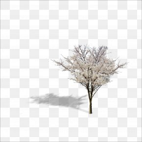 Plant - Twig Tree Download Icon PNG