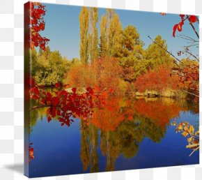 Autumn Tumblr Photography - Nature Reserve Maple Leaf Gallery Wrap Photography PNG