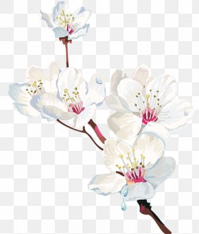 Cherry Blossom - Cherry Blossom Watercolor Painting Flower PNG