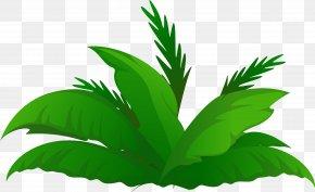 Plants - Arecaceae Date Palm Tree Clip Art PNG