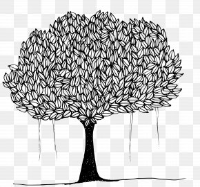 Tree - Tree Ficus Religiosa Banyan Clip Art PNG