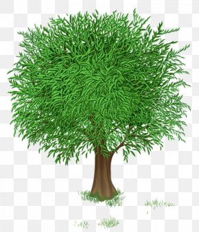 Tree Transparent - Tree Spring Clip Art PNG