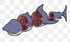 Shark Transparent Background - Clip Art Image Fish Shark PNG