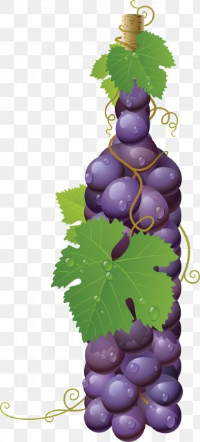 Grape Image - Common Grape Vine Wine Must PNG