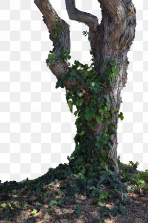 Withered,Trees,Branches,trunk,Trees,wood - Trunk Learn About Trees Branch PNG