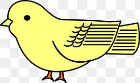 Bird - Bird Cartoon Drawing Clip Art PNG
