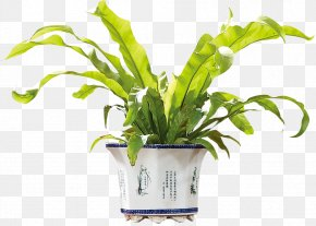 Potted Plant - Plant Download Flower PNG