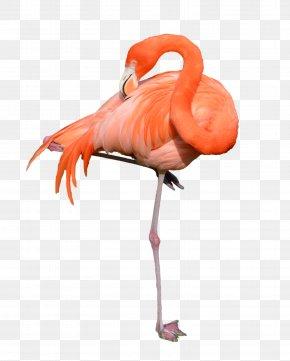 Flamingo - Flamingo Clip Art PNG