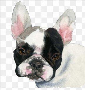 Black Bulldog - French Bulldog Puppy Watercolor Painting PNG