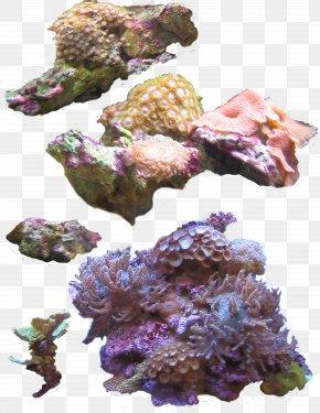 Deep Sea Plants - Coral Sea Anemone Photography Clip Art PNG