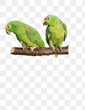 Hand-painted Parrot - Bird Parrot Cockatiel Budgerigar Dog PNG