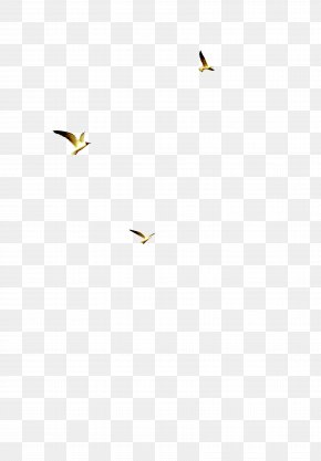 Fly - Yellow Angle Pattern PNG