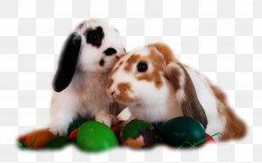 Desktop Wallpaper Easter Egg Easter Bunny Widescreen Png