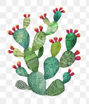 Watercolor Cactus - Cactaceae Watercolor Painting Art Illustration PNG