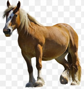 Mustang Wild Horse Clip Art - Running Horse Png , Free Transparent Clipart  - ClipartKey