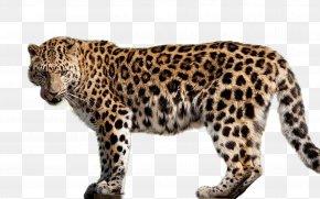 Leopard - Amur Leopard Felidae Cheetah Jaguar PNG