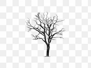 Tree - Twig Tree Branch Trunk Pine PNG