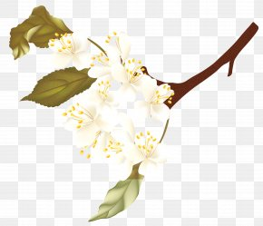 Branch Tree - Floral Spring Flowers PNG