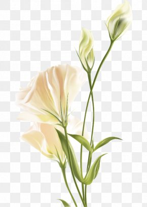 Lily White Flower - Flower Euclidean Vector White PNG